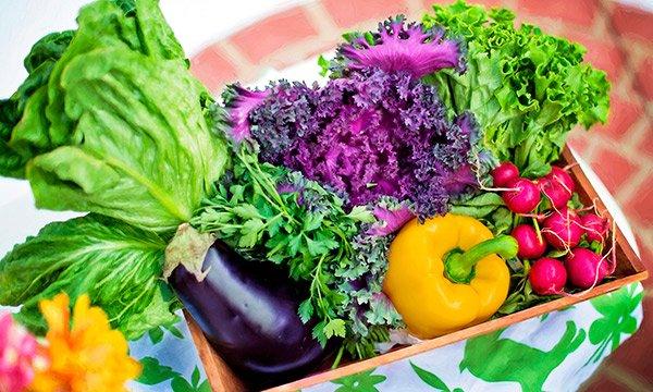 Alimentos sanos para una vida saludable